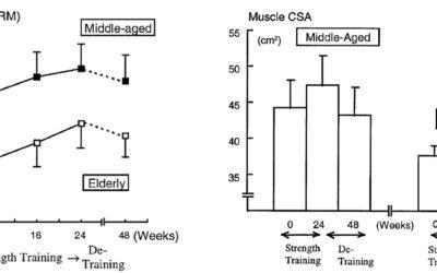 Harjoittelutauon vaikutus lihasten kokoon ja voimantuottoon - Vieraskirjoitus