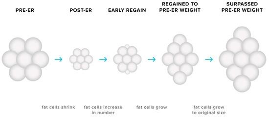 Miksi lähes kaikki laihdutuskuurit epäonnistuvat? Ja mitä onnistuminen vaatii?